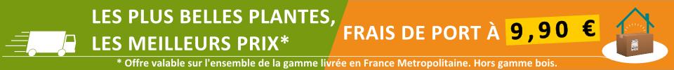 Les meilleures plantes du marché au meilleur prix, livrées partout en France métropolitaine pour 9.90 €