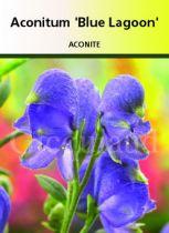 Aconitum \'Blue Lagoon\'