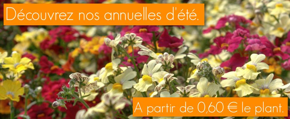 Pour votre jardin, vos balcons et terrasses, en jardini�res, en pots ou en pleine terre, �gayez votre �t� avec nos plantes annuelles � fleurs et � feuillage d�coratif, lierres de balcons, g�raniums ou plantes � massif...