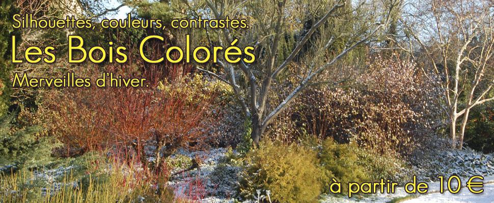 Un hiver au jardin et de nombreuses plantes aux bois de couleurs et écorces décoratives.