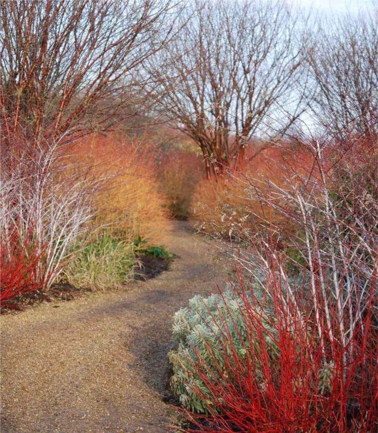 scène hivernale de jardin montrant les bois colorés des arbres et arbustes.