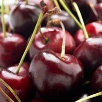 cerisier--delice-de-malicorne--z-agoudel-p-image-33886-grande