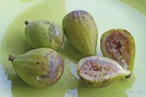 Figuier Madeleine de deux saisons, arbre fruitier aux feuilles vertes caduques et aux fruits en été et début d\'automne à peau verte dorée et à chair blanc rosé.