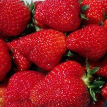 fraise-cireine-fruit-4