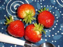 fraise manille A