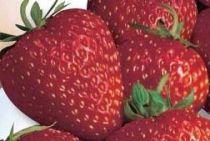 fraisiers surprise des halles5402