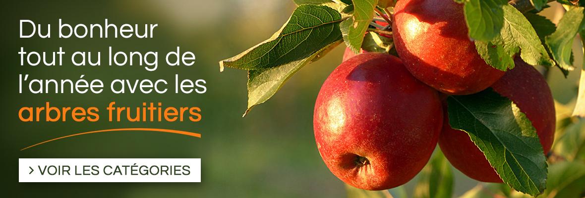 Large choix de fruitiers, pommiers, poiriers, pruniers, pêchers, brugnoniers, cerisiers, figuiers, kakis, noisetiers, vignes, kiwis, framboisiers, fraisiers...