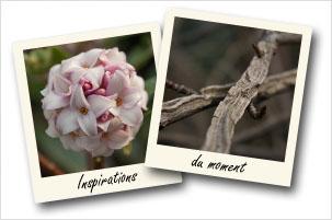 Galerie photo propos�e par Grandiflora pour d�couvrir de nouvelles plantes