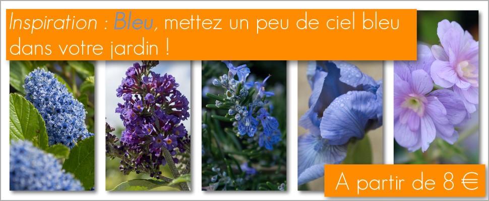 Une large gamme de vivaces, arbustes � fleurs bleues pour un jardin serein et �l�gant.