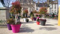Des pots de couleurs de toutes tailles agrémentés de plantes issues des Pépinières Gicquiaud Groupe Grandiflora sur la place Maurice Marchais de Vannes (Morbihan 56) pour 'Des jardins dans la ville'
