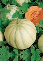 Melon Karman