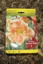 Narcisse \'Apricot whirl\'