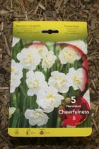Narcisse \'Cheerfuness\'