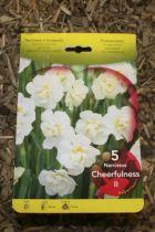 Narcisse \'Cheerfuness\'