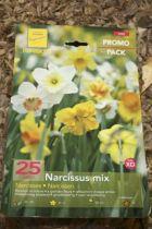 Narcisse  en mélange