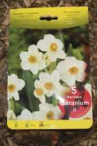 Narcisse \'Géranium\'
