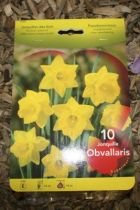 Narcisse \'Obvallaris\'