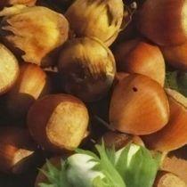 Noisetier \'Géant de Halle\', Arbre fruitier caduc à feuille verte et aux fruits rond marron à la chair blanche en été.