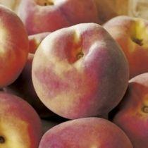 Pêcher \'Grosse Mignonne\', arbre fruitier caduc à feuille verte et aux fruits blanc lavé de rouge en été.