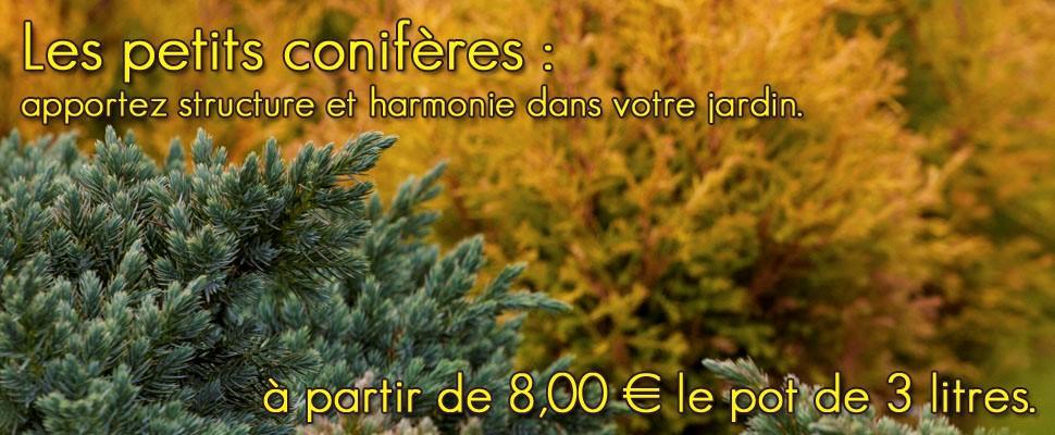 Large choix de petits conifères issu de notre gamme de plantes Grandiflora pour apporter structure et harmonie à votre jardin.