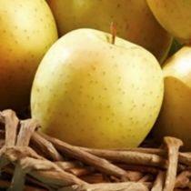 Pommier \'Tentation\' ® delblush, arbre fruitier à feuille caduc verte et aux fruits jaune en automne.
