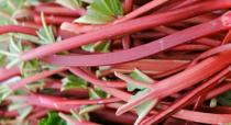 Rhubarbe \'Red Champagne\'
