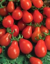 Tomate poire \'Red Pear\'