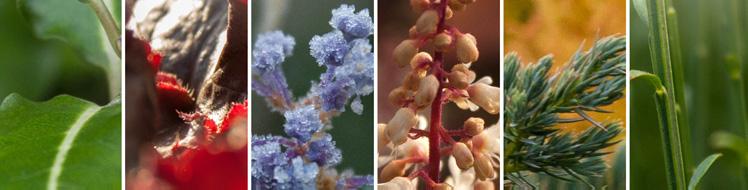 Toutes nos variétés de plantes sur notre jardinerie en ligne Grandiflora