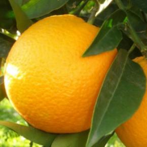 Découvrez nos fruitiers