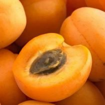 Abricotier \'Rustique des Pyrénées\' ® bourqui, arbre fruitier caduc à feuille verte et aux fruits jaune orange en été.
