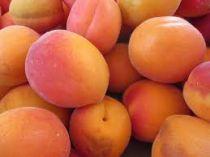 Abricotier \'Vertige\'® - Prunus* armeniaca