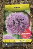 Allium \'Gladiator\'