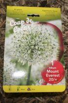 Allium \'Mount everest\'