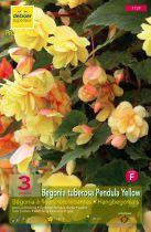 Begonias pendulas jaunes