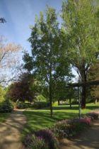 IMG_7548, arbre au feuillage caduc vert devenant jaune en automne. Bois blanc en hiver.