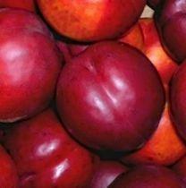 Brugnonier \'Silver Lood\', arbre fruitier caduc à feuille verte et aux fruits rouge en été.
