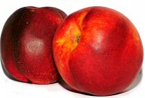 Brugnonier nain \'Nectarella\' cov - Prunus persica