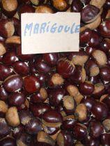 Castanea* sativa \'Marigoule\'