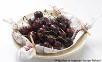 Cerisier \'Délice de Malicorne\' ® agoudel