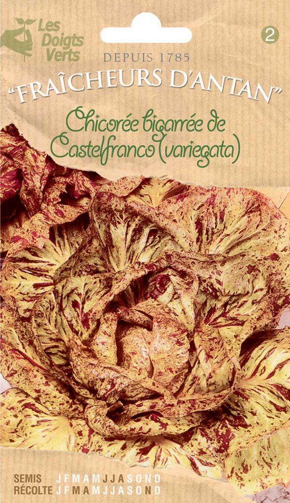 Chicorée bigarrée de Castelfranco ( Variegata)