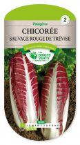 Chicorée sauvage rouge de Trevise