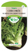 Chicorée scarole Cornet d\'Anjou
