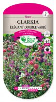 Clarkia elegant double varié