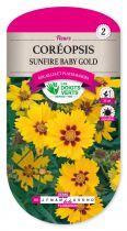 Coreopsis Sunfire Babygold