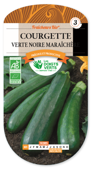 Courgette Verte Noire Maraichère Bio