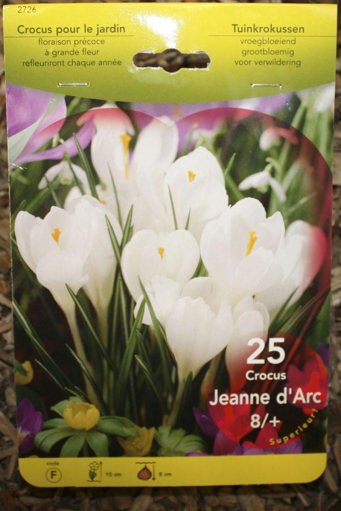 Crocus \'Jeanne d\'arc blanc\'