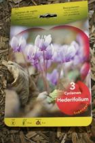 Cyclamen \'Hederifolium\'
