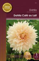 Dahlia Café au lait