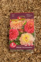 Dahlias \'Les Princesses\'