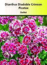 Dianthus diadoble \' Crimson Picotee\'